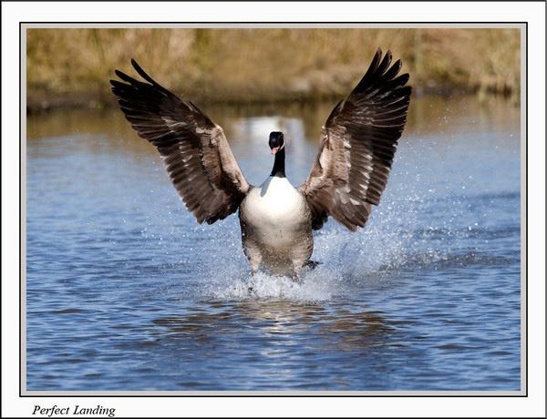 Perfect Landing by Gezina