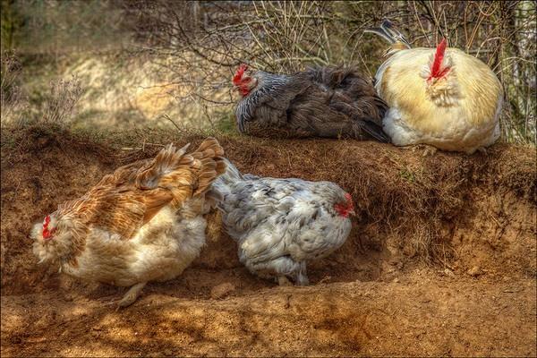 Down On the farm by KevSB
