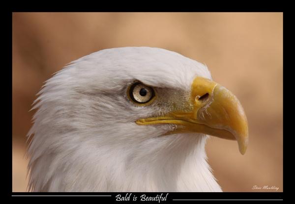 Bald is Beautiful by SteveMoulding
