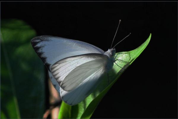 White by Thushari