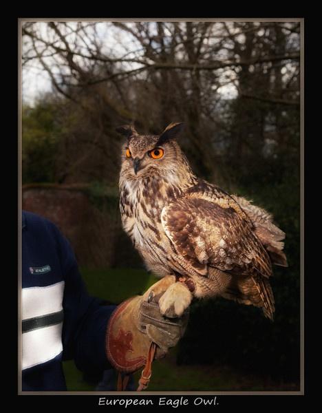 Eagle Owl. by jackfisher
