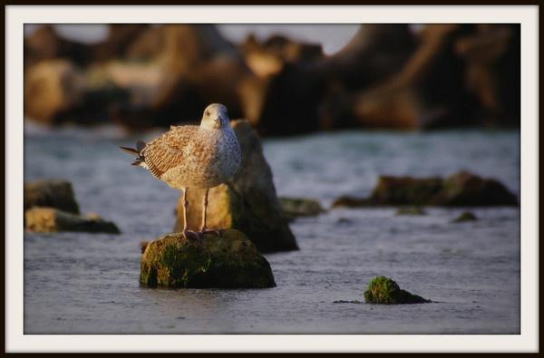 Alone among the rocks by Bonico