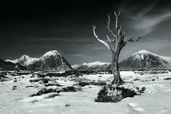 The Dead Tree by cdm36