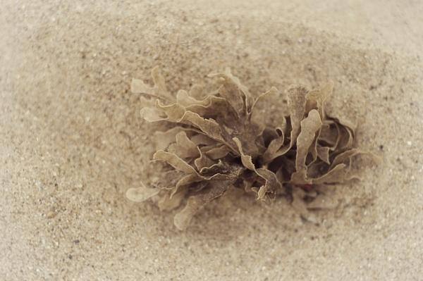 Beachcombing by Fishnet