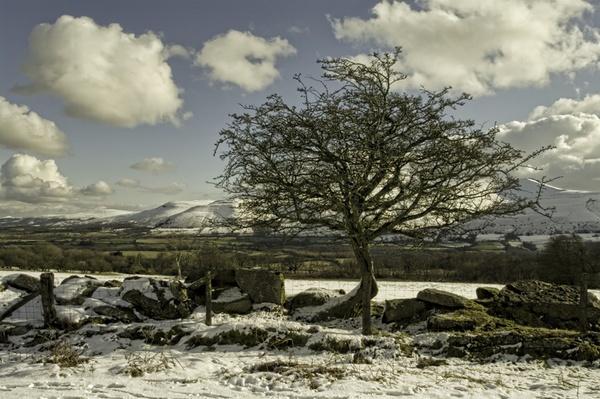 Weather worn tree by royd63uk