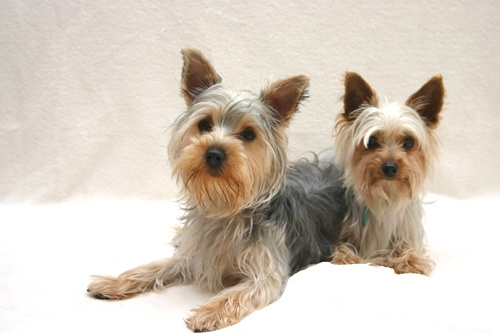 Lilli & Benji by alfacolin156