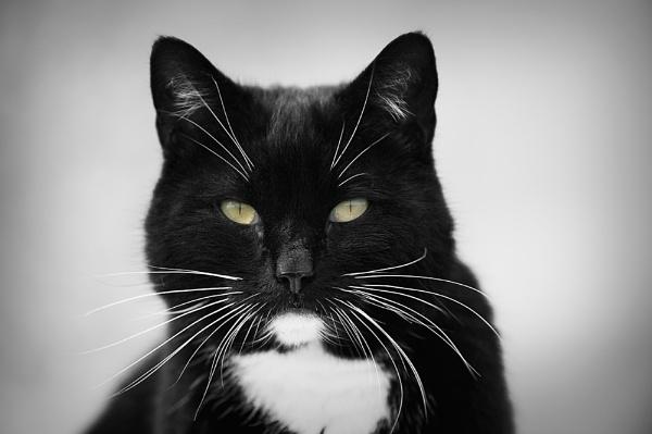 Cool Cat by Goggz