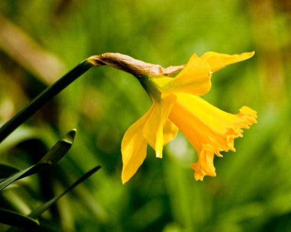 Spring into Summer by colmar