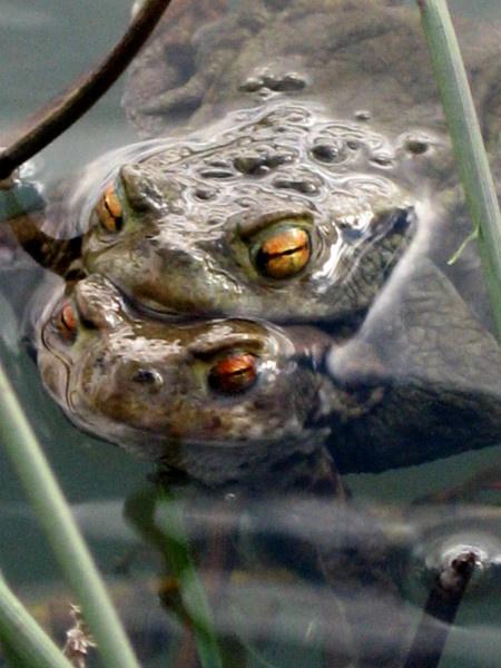 toads by firepoi69