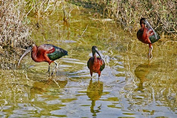 Crete Wetland 1 by PatriciaWilson
