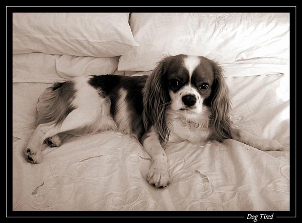 Dog Tired by jjmorgan36
