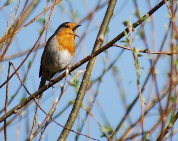 sing birdie sing by brownbear