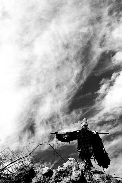Scarecrow by aminnadi