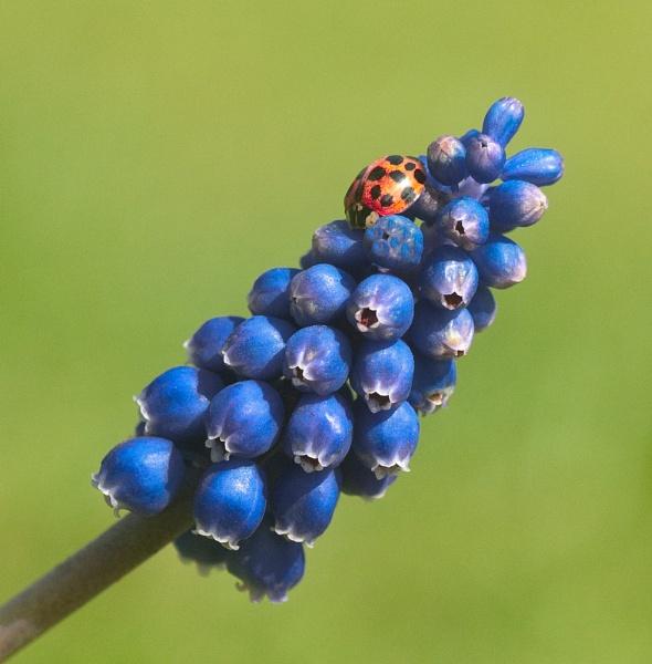 Ladybird by jonah794