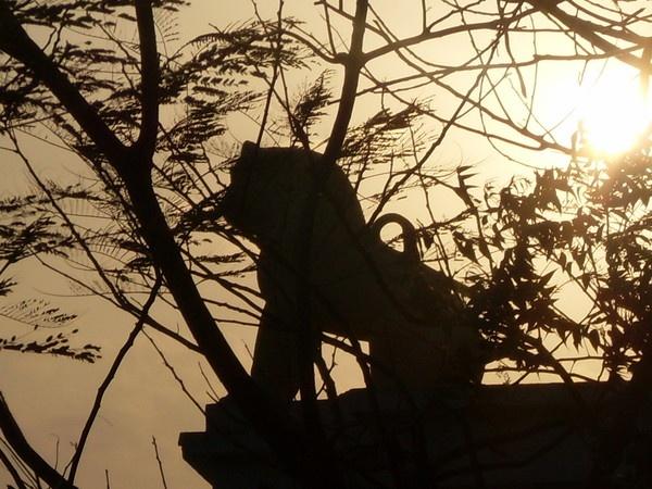 "\"" the lion & sun\"" by sunnilkalinndi"