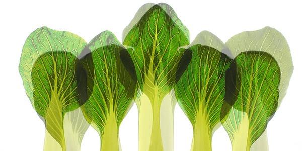 Pac choi leaves
