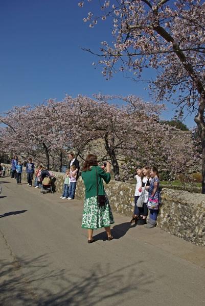 Spring blossom 2 by VivienO