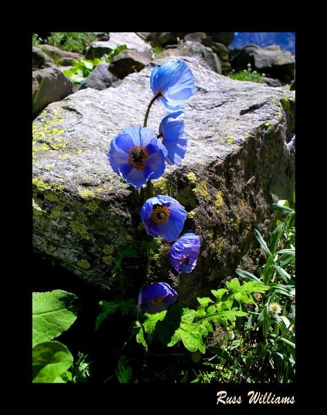 Blue. by hairymonkey