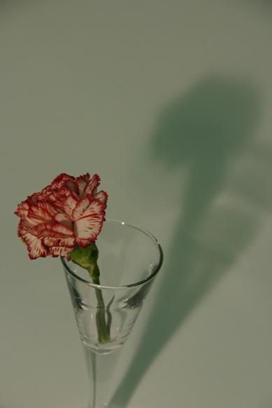 Lone Flower by chrisvannamen
