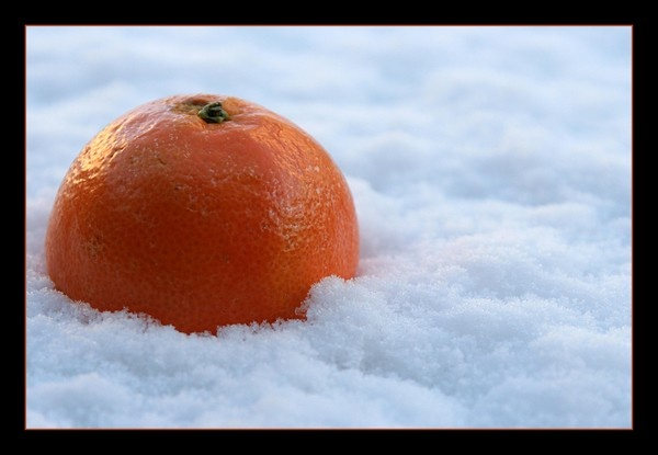 Chilly Orange by Montana5