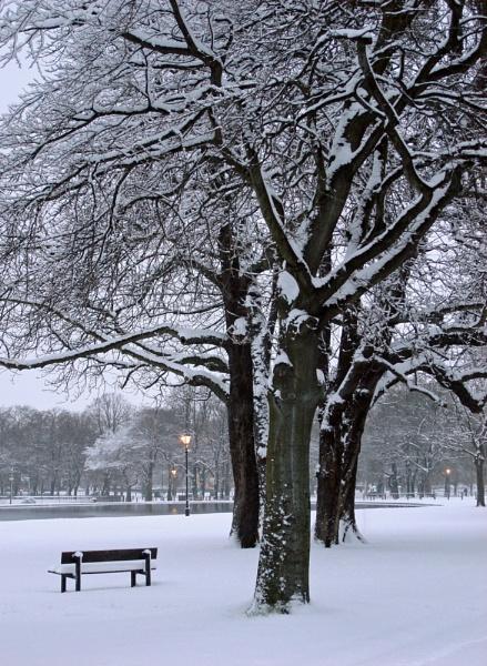 Winter wonderland by StevenBest