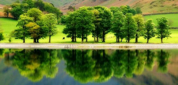 A Row Of Trees by TeresaH