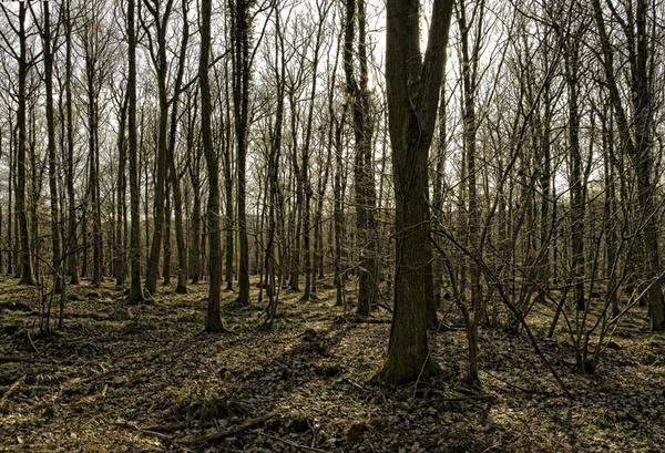 Woodland by royd63uk