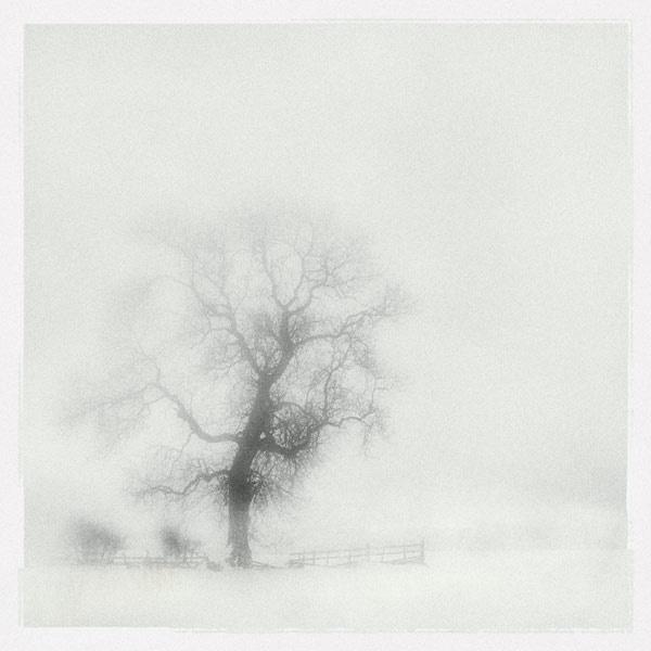 snow storm by StevenLePrevost