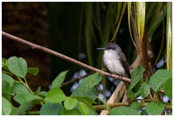 Bird by Mirjam
