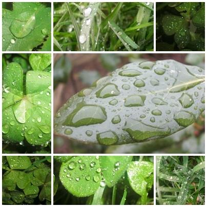 Rainy Day? by mushroomgirl