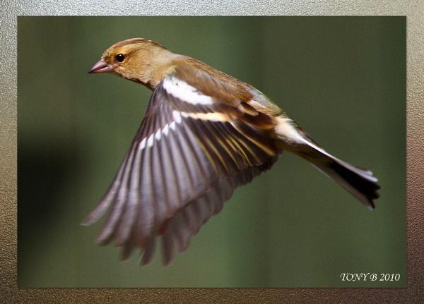 Fly, Brake, Land by Tony_B