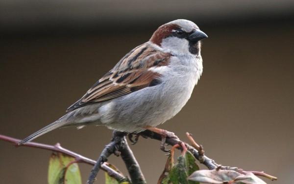 Bird by rowejay