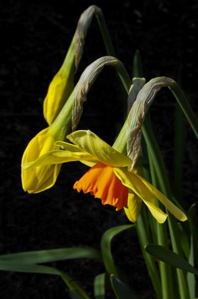 Spring by sharlotte51