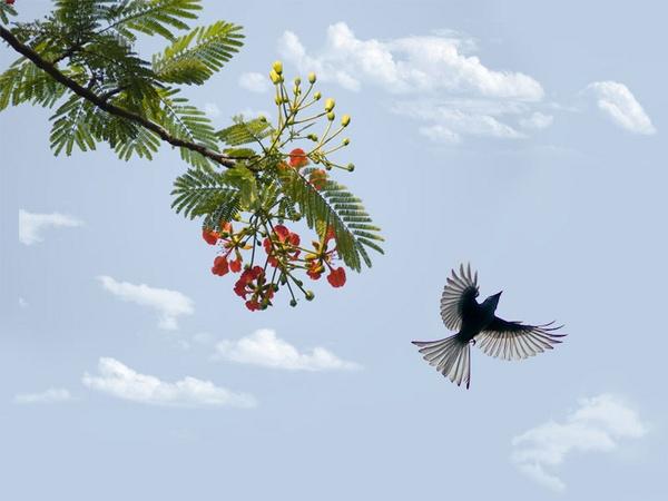 The bird is flying by hoang_van