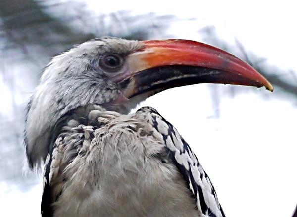 weird by sparrowhawk