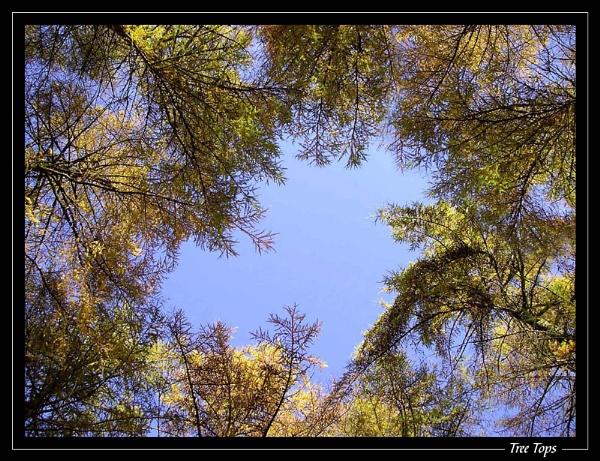 Tree Tops by jjmorgan36