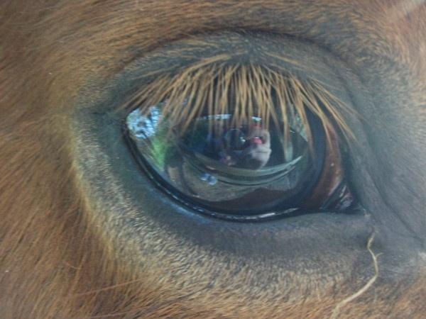 horse eye by laura95
