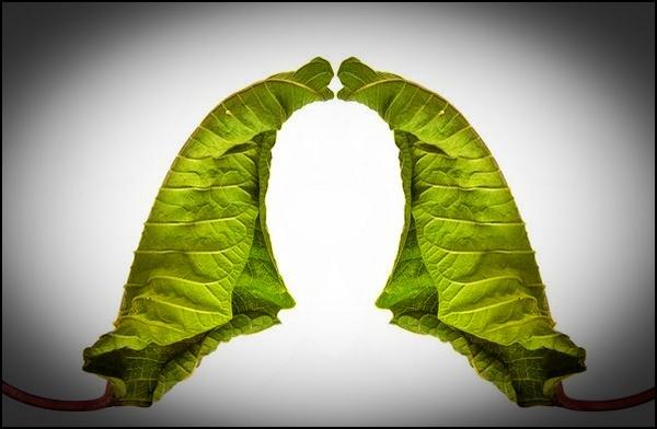 Leaf by peely