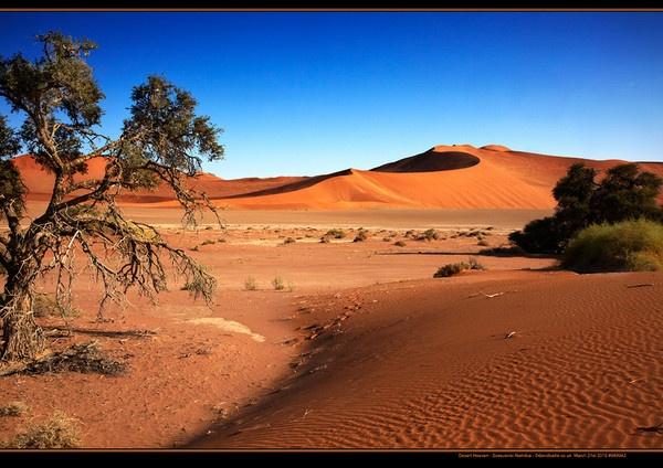 Desert Heaven by davidbailie