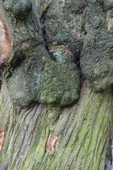 Tree texture by chrisvannamen