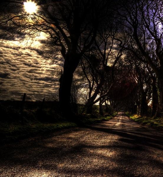 Creepy Woods by taylortopcat