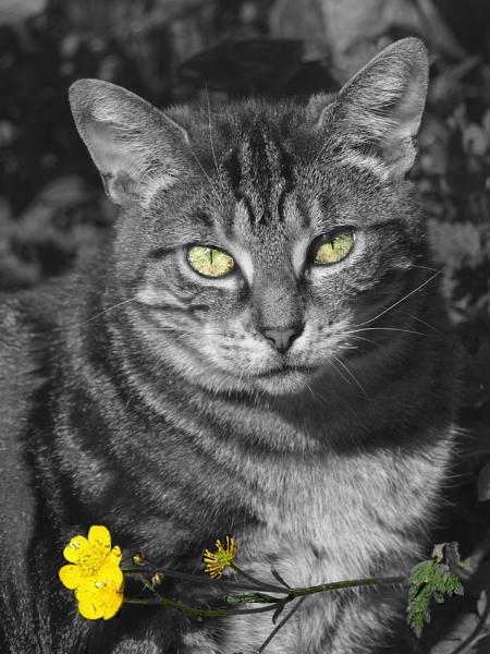 Tabs by taylortopcat