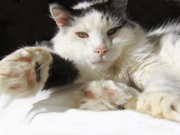 Give me 5 by taylortopcat