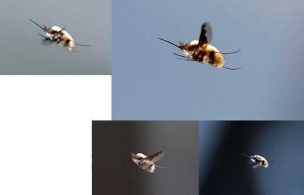 Bug ID by francisr