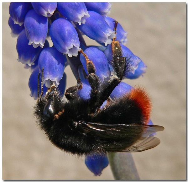 Big Bee by bunbeam