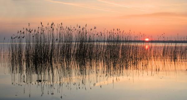 reeds by JOELP
