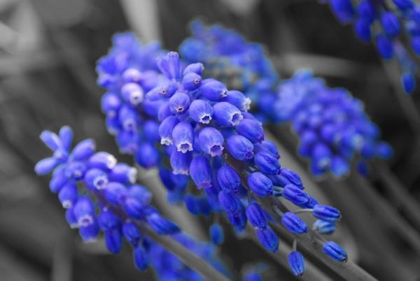 Feeling Blue? by King0