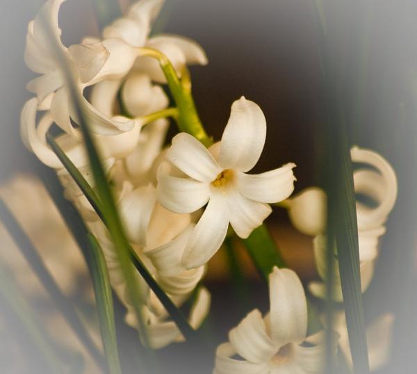 Railway Flowers by colmar