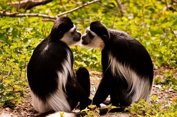 Gis\' a kiss by colmar