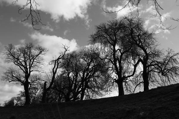 Calke Abbey Park by smartiemart